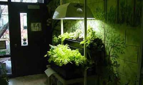indoorgarden2